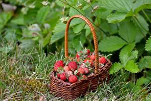 Hintergrundbilder Beere Hügel-Erdbeere Weidenkorb Lebensmittel