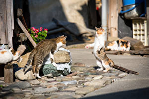 Photo Cats Street 2 animal