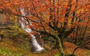 Hintergrundbilder Spanien Wasserfall Herbst Park Bäume Ast Uguna Waterfall Gorbea Natural Park Bizkaia Basque Country Natur