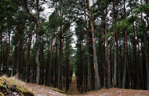 Hintergrundbilder Litauen Wälder Bäume Curonian Lagoon Natur