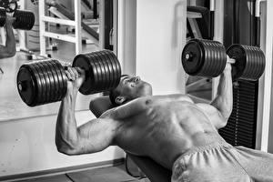 Fotos Bodybuilding Mann Hanteln Trainieren sportliches
