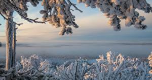 Fotos Finnland Winter Lappland Landschaft Schnee Ast  Natur