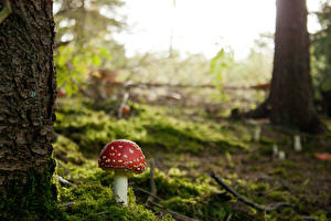 Hintergrundbilder Pilze Natur Laubmoose Natur