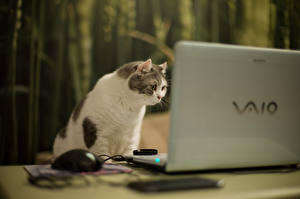 Wallpapers Cats Laptops Animals