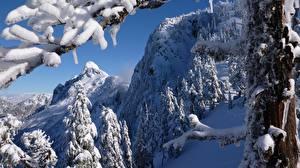 Bilder Kanada Winter Wälder Schnee Ast North Shore Mountains Vancouver British Columbia Natur