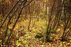 Fotos Wälder Bäume Ast Natur