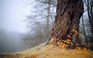 Hintergrundbilder Rinde Nebel Bäume Baumstamm Natur