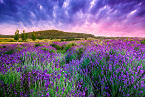Fotos Acker Lavendel Himmel Natur Blumen