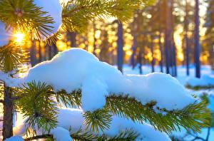 Fotos Winter Schnee Ast Lichtstrahl Natur