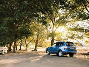 Hintergrundbilder Subaru Metallisch Hinten Bäume 2016 Subaru Forester Autos