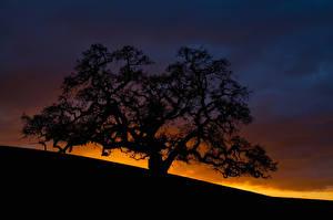 Hintergrundbilder Sonnenaufgänge und Sonnenuntergänge Silhouette Bäume Ast Natur