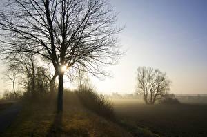 Hintergrundbilder Nebel Bäume Ast Natur
