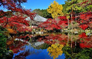 Image Japan Pond Gardens Autumn Nature