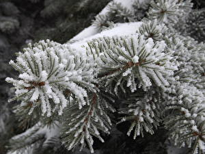 Bilder Winter Großansicht Ast Schnee Natur