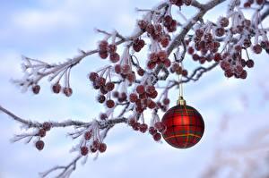 Bilder Feiertage Neujahr Kugeln Ast Schnee