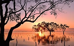 Hintergrundbilder Philippinen Sonnenaufgänge und Sonnenuntergänge Bäume Silhouetten Ast Mindanao Natur