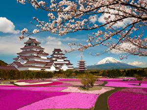 Bilder Japan Park Gebirge Pagoden Fuji Vulkan Japanische Kirschblüte Vulkan Ast Aizuwakamatsu Castle Tsuruga Castle Fukushima Städte