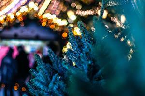 Fotos Neujahr Ast Fichten