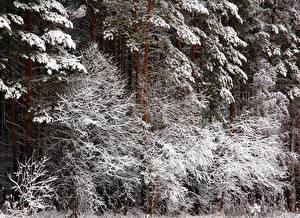 Bilder Bäume Schnee Ast Natur