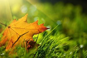Hintergrundbilder Herbst Nahaufnahme Blattwerk Gras Natur