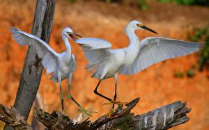 Wallpaper Bird Herons Wings 2 Animals