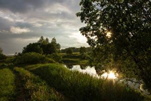 Bilder Sommer Sumpf Gras