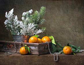 Bilder Zitrusfrüchte Mandarine Schmuck Ast Lebensmittel