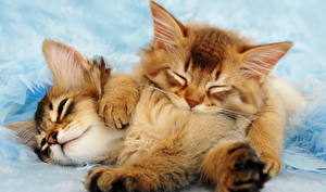 Wallpaper Cats Kitty cat 2 Ginger color animal