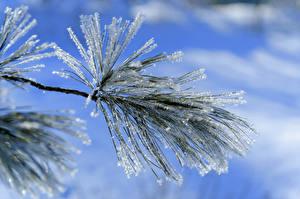 Bilder Winter Großansicht Schnee Ast Natur