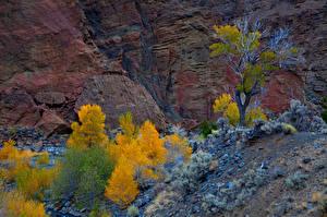 Fotos USA Herbst Park Zion-Nationalpark Felsen
