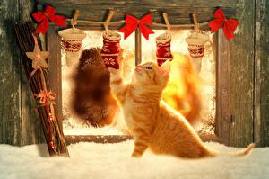 Fotos Hauskatze Feiertage Neujahr Katzenjunges Ingwer farbe Fenster Schnee Schleife ein Tier