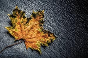 Bilder Herbst Großansicht Blattwerk Ahorn