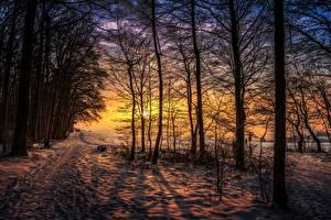 Hintergrundbilder Winter Sonnenaufgänge und Sonnenuntergänge Bäume Schnee Weg Ast Natur