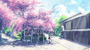 Tapety na pulpit Vocaloid Hatsune Miku Sakura yuuko-san Anime Dziewczyny