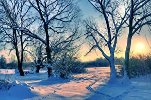 Hintergrundbilder Winter Sonnenaufgänge und Sonnenuntergänge Bäume Schnee Ast Natur