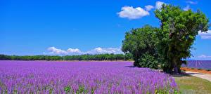Hintergrundbilder Frankreich Lavendel Felder Himmel Natur Blumen