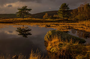 Picture England Stone Swamp Trees Nature