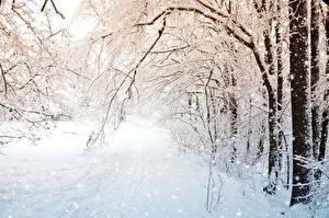 Bilder Winter Schnee Bäume Ast Natur