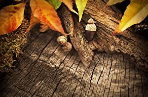 Hintergrundbilder Hautnah Herbst Blatt Aus Holz Natur