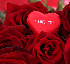 Hintergrundbilder Rosen Hautnah Valentinstag Bordeauxrot Herz Blumen