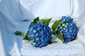 Photo Hydrangea Bouquet Light Blue Two Flowers