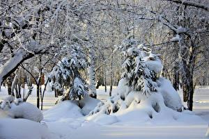 Bilder Russland Wälder Winter Bäume Fichten Schnee Ast  Natur