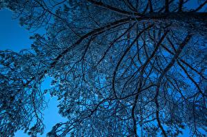 Bilder Bäume Ast Schnee Natur