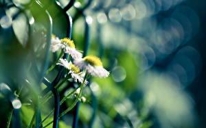 Bakgrunnsbilder Nærbilde Gjerder Blomster