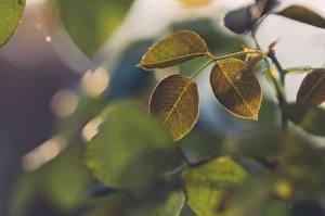 Image Closeup Foliage Green Branches Nature