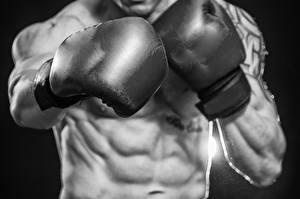 Image Boxing Men Belly Sport