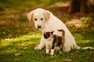 Pictures Dog Cats Kittens Puppy Two Grass Animals