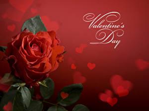 Fotos Valentinstag Rose Nahaufnahme Rot Herz Blumen