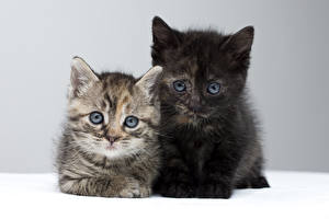 Wallpapers Cats Kittens 2 Glance Animals
