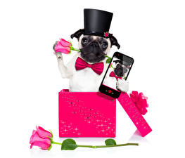 Wallpapers Dog Rose Holidays Bulldog Hat Pink color Smartphone Box Bowknot Bow tie animal